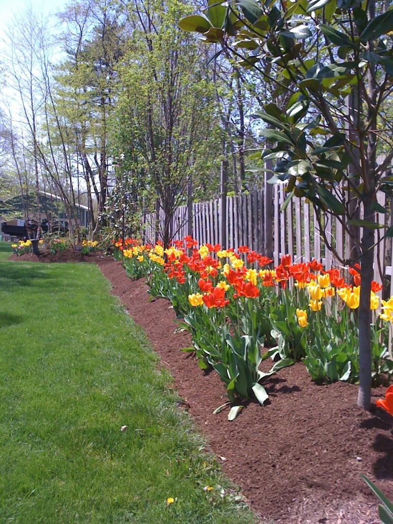Landscape design mccusker landscaping for The garden design sk